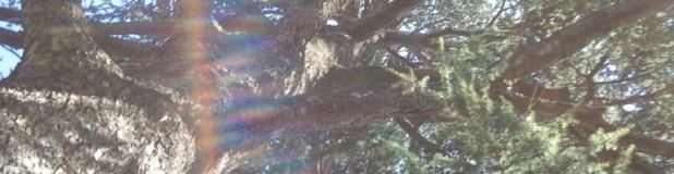 cropped-2012-01-05-16-02-59.jpg